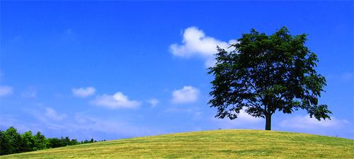 風の中に立つ1本の木