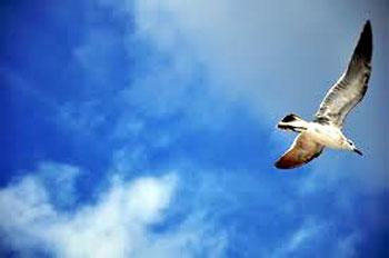 空を飛ぶ自由な鳥